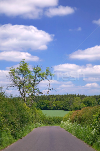 Country Lane Stock photo © RTimages