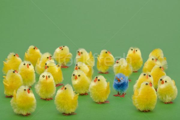 Easter chicks the odd one out Stock photo © RTimages