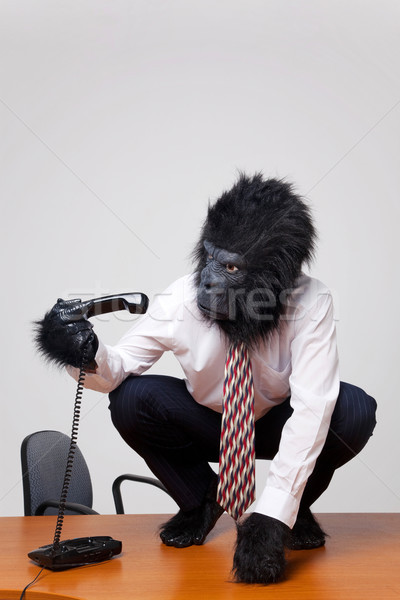 Gorilla on a desk picking up the phone. Stock photo © RTimages