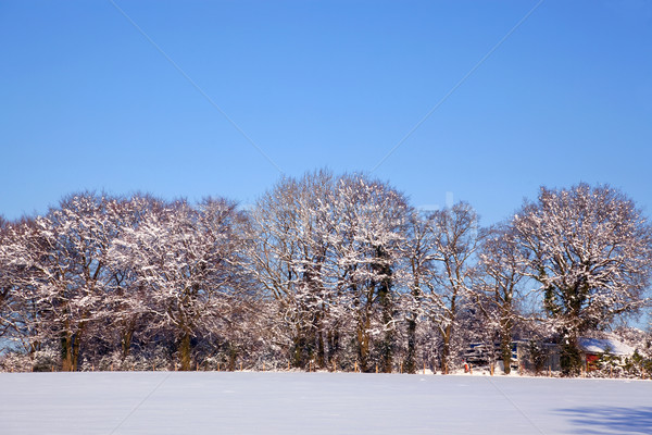 Snow landscape Stock photo © RTimages