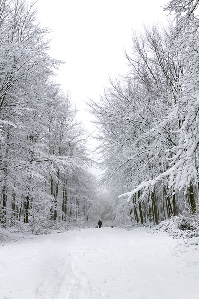 Dog walk in the snow Stock photo © RTimages