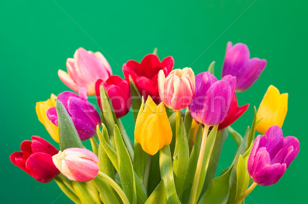 Wet tulips Stock photo © RTimages