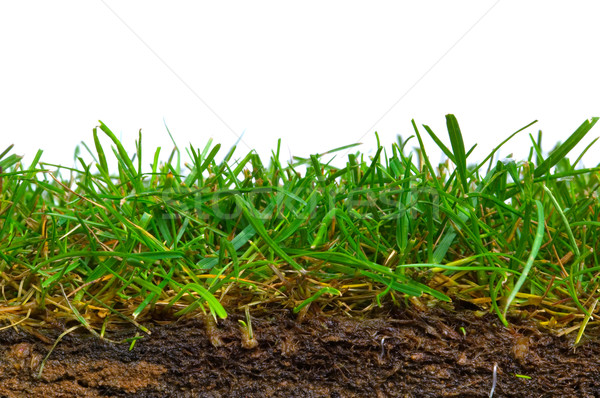 Turf cross section Stock photo © RTimages