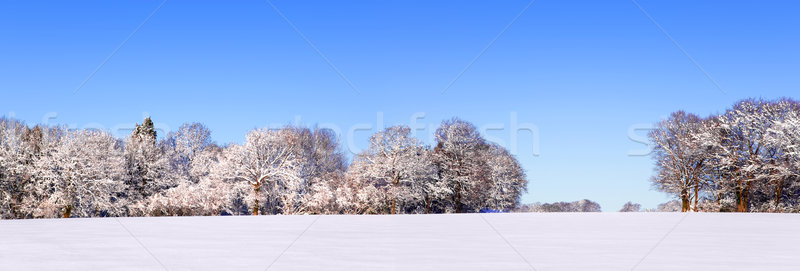 Snow panoramic landscape Stock photo © RTimages
