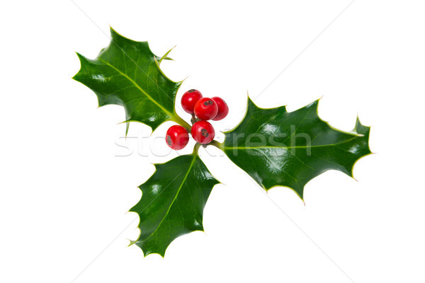 Sprig of holly isolated on white Stock photo © RTimages