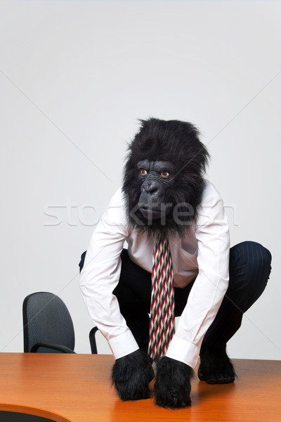 Gorilla businessman in shirt and tie sat on a desk Stock photo © RTimages