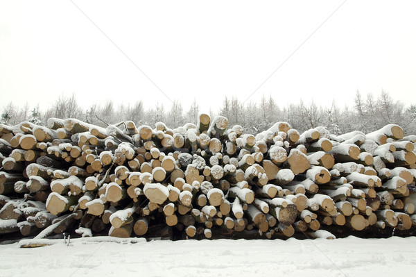 Snow covered log pile Stock photo © RTimages