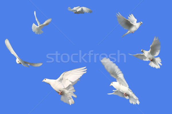 Circle of Doves Stock photo © RTimages