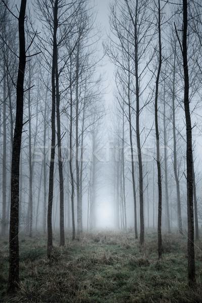 árbol plantación niebla mirando líneas alto Foto stock © RTimages