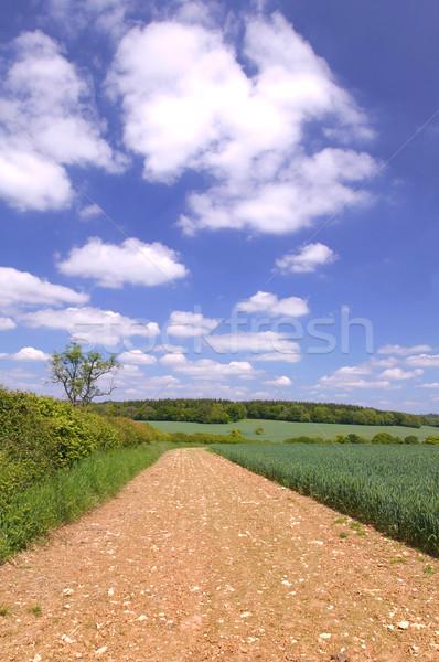 Mud track landscape Stock photo © RTimages