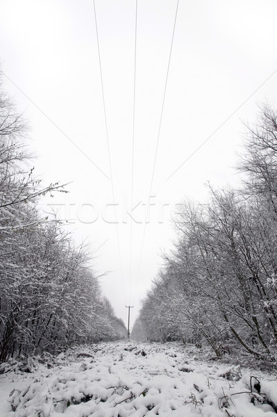 Telephone lines in the snow Stock photo © RTimages