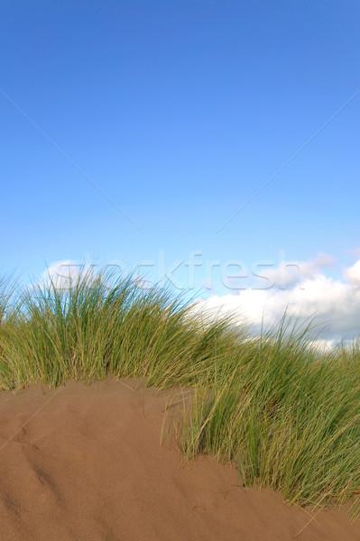 Duna creciente cielo azul hierba sol naturaleza Foto stock © RTimages