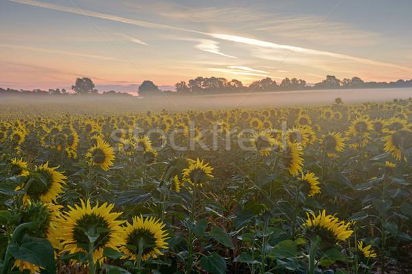 Waiting for sunrise Stock photo © RTimages