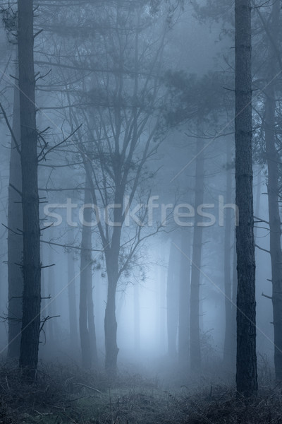 Path through foggy woodland Stock photo © RTimages