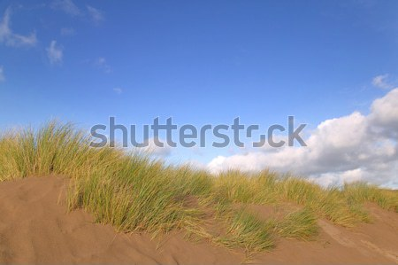 Sand Dunes Stock photo © RTimages