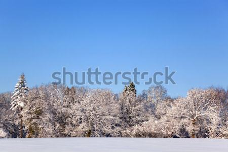 Neve paisagem foto campo árvores coberto Foto stock © RTimages