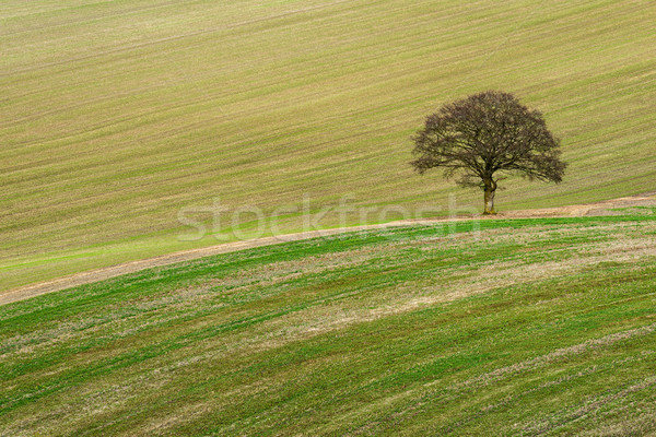Scarified  Stock photo © RTimages