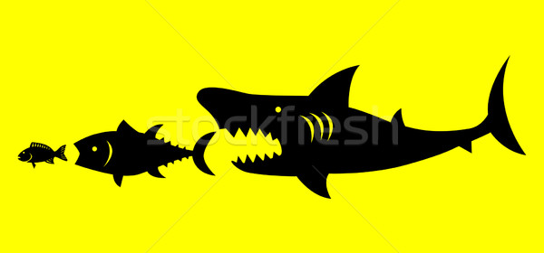 Naturalismo lei grande peixe banco Foto stock © rudall30