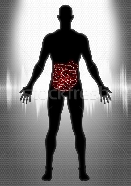 Silhueta ilustração homem anatomia médico projeto Foto stock © rudall30