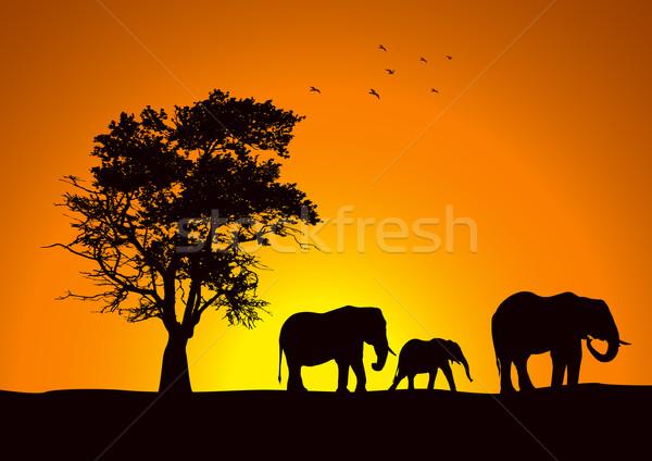 Słoń rodziny sylwetka grupy drzewo piękna Zdjęcia stock © rudall30