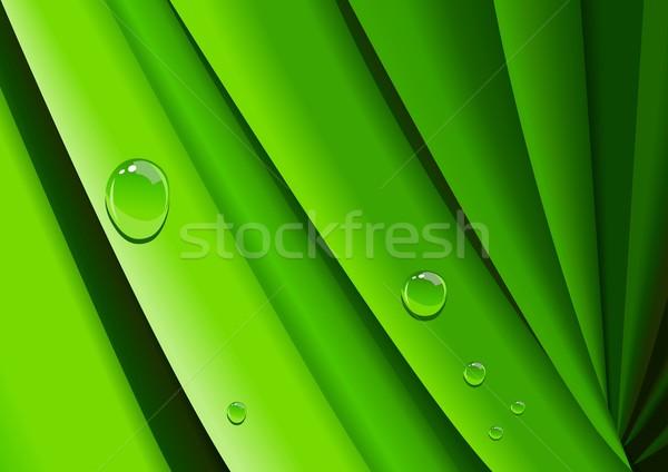 Manana rocío resumen ilustración hierba agua Foto stock © rudall30