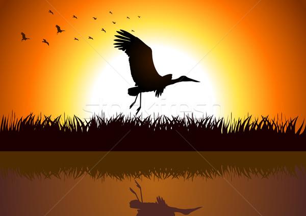 Bocian sylwetka ilustracja rzeki banku trawy Zdjęcia stock © rudall30