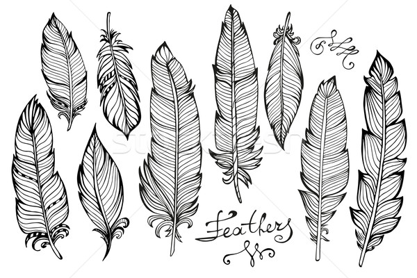 Hand drawn bird feathers  closeup big set isolated on white Stock photo © rumko