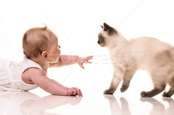 Baba kiscica kislány játszik brit rövidszőrű Stock fotó © runzelkorn