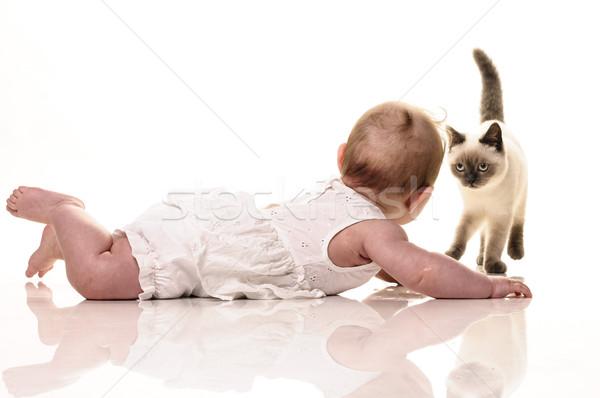 赤ちゃん 子猫 演奏 英国の ショートヘア ストックフォト © runzelkorn