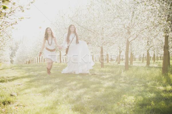 Lányok cseresznyevirág kettő séta kéz fű Stock fotó © runzelkorn