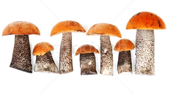 Timber fresh mushrooms Stock photo © RuslanOmega