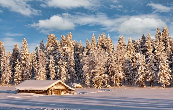 Winter ijzig bos bomen gedekt sneeuw Stockfoto © RuslanOmega
