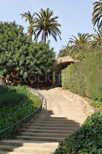 Stockfoto: Trappenhuis · palmbomen · trap · groene · palmen