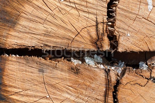 Wooden old stump Stock photo © RuslanOmega