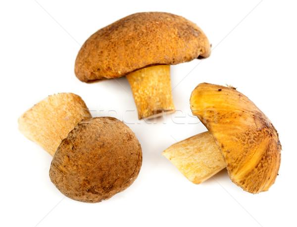 handful of mushrooms Stock photo © RuslanOmega