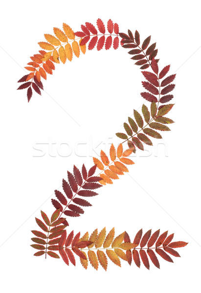 Numeral two 2 put from autumn sheet Stock photo © RuslanOmega