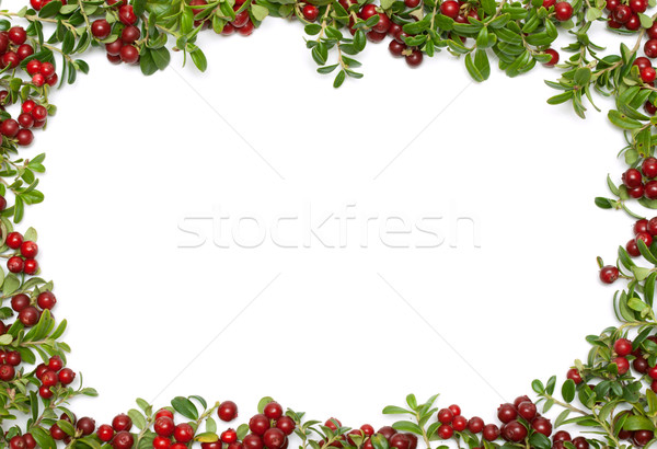 Frame from of the cowberry  Stock photo © RuslanOmega