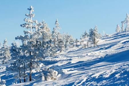 Tél tájkép hegyek fenyőfa fák hó Stock fotó © RuslanOmega
