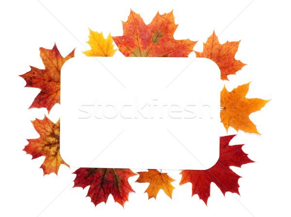 Сток-фото: осень · лист · кадр · бумаги · аннотация · природы