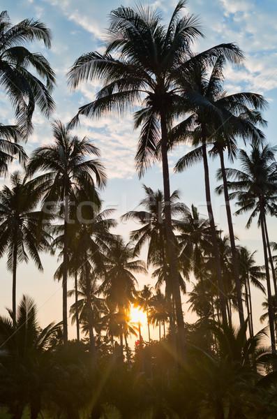 silhouettes of palm trees on sunset Stock photo © RuslanOmega