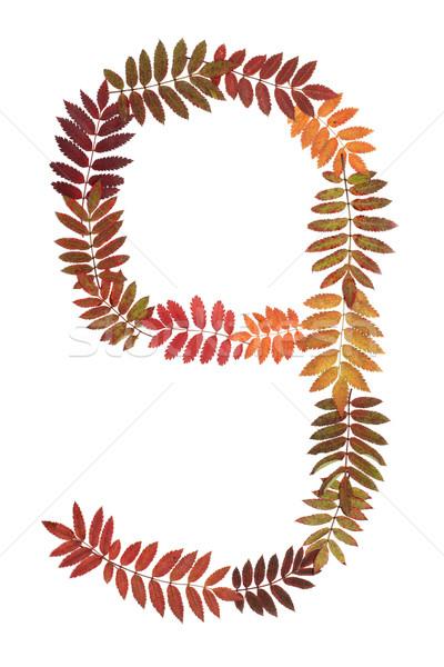 Foto stock: Numeral · nove · outono · folha · branco · natureza