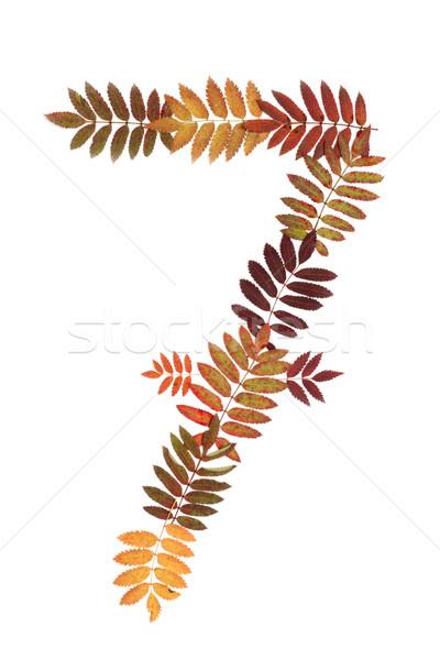 Numerale sette autunno foglio bianco bellezza Foto d'archivio © RuslanOmega