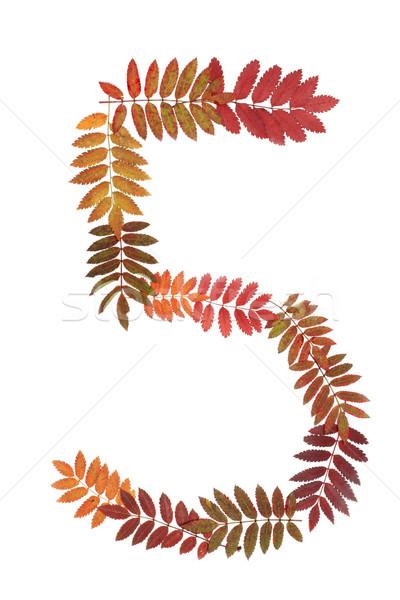 Foto stock: Numeral · cinco · outono · folha · branco · beleza