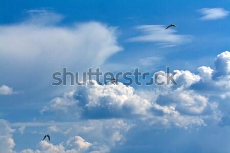 Foto stock: Três · gaivotas · céu · nuvens · paisagem · pássaro