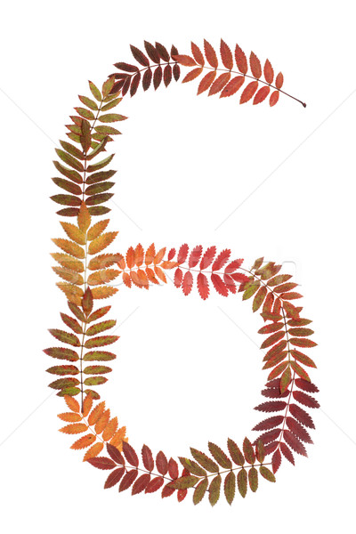 Numeral six 6 put from autumn sheet Stock photo © RuslanOmega