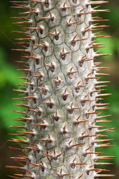 Stem tropical tree with needle Stock photo © RuslanOmega