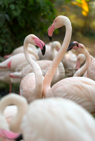 flamingo Stock photo © RuslanOmega