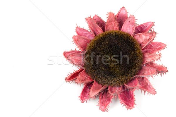 Dried flowers of sunflowers Stock photo © RuslanOmega