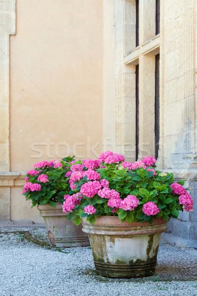 Pembe çiçekler duvar pencere bitki bitkiler Stok fotoğraf © RuthBlack