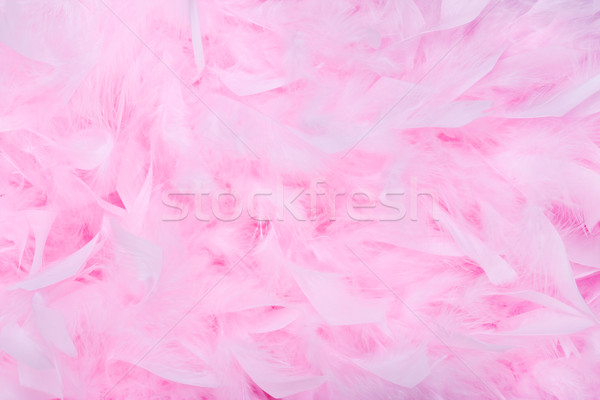 Pink feather boa background Stock photo © RuthBlack